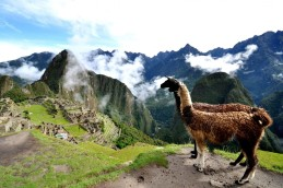 lama-and-machu-picchu-peru-1600x1067